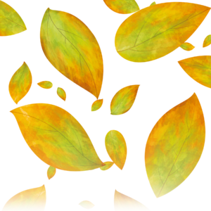 Rolled Leaves